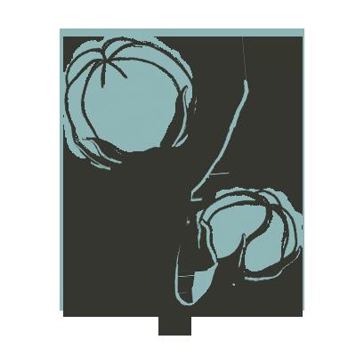dessin de fleur de coton